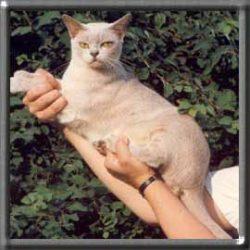 kattenisakkensbandlystibovelse