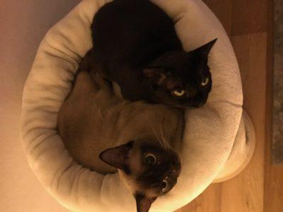 Nellie & Suki