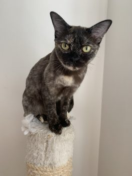 Kitty-juli21-nr1