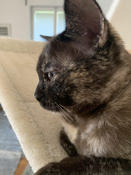 Kitty-juli21-nr2