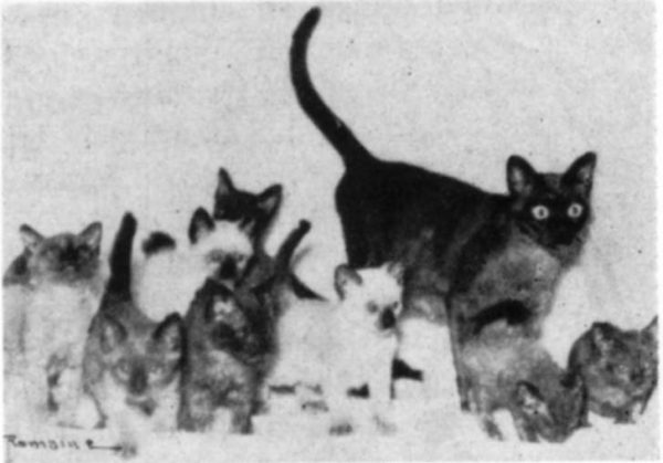 Wong Mau and kittens